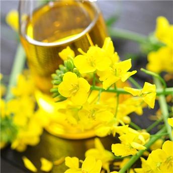 Bienfaits et vertus de l'huile de colza